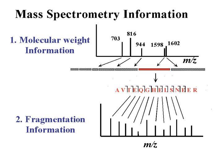 Mass Spectrometry Data