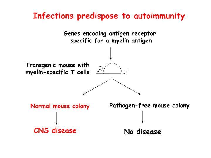 Infections predispose to autoimmunity