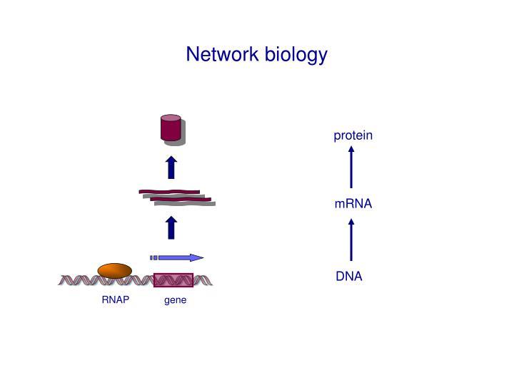 Network biology