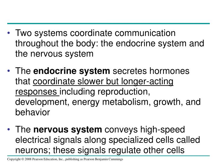 Two systems coordinate communication throughout the body: the endocrine system and the nervous syste...