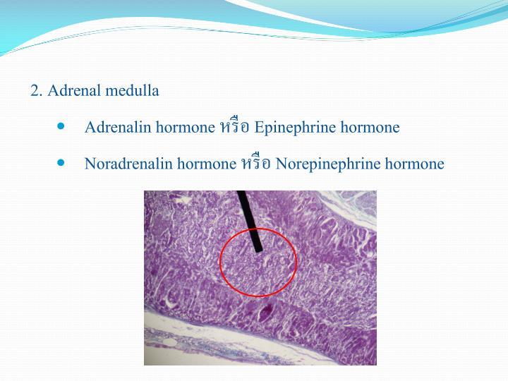 2. Adrenal medulla