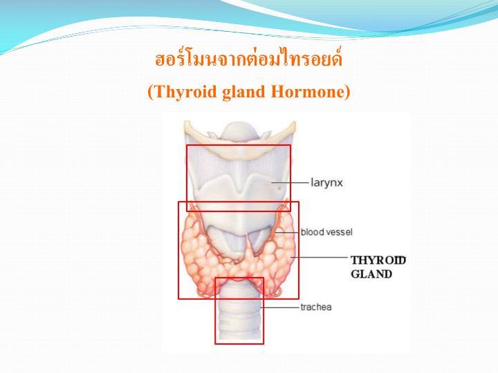 ฮอร์โมนจากต่อมไทรอยด์