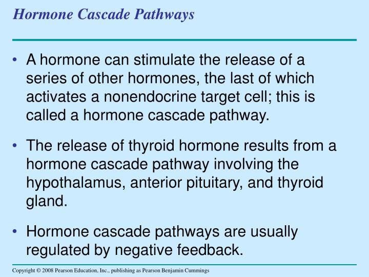 Hormone Cascade Pathways