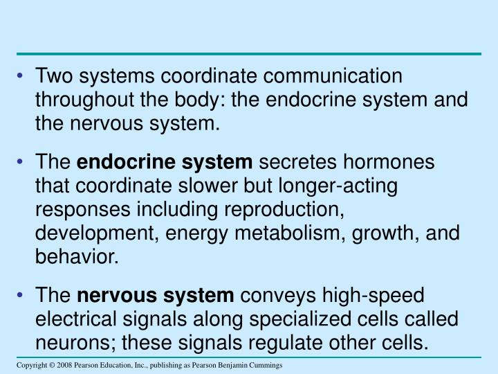 Two systems coordinate communication throughout the body: the endocrine system and the nervous system.