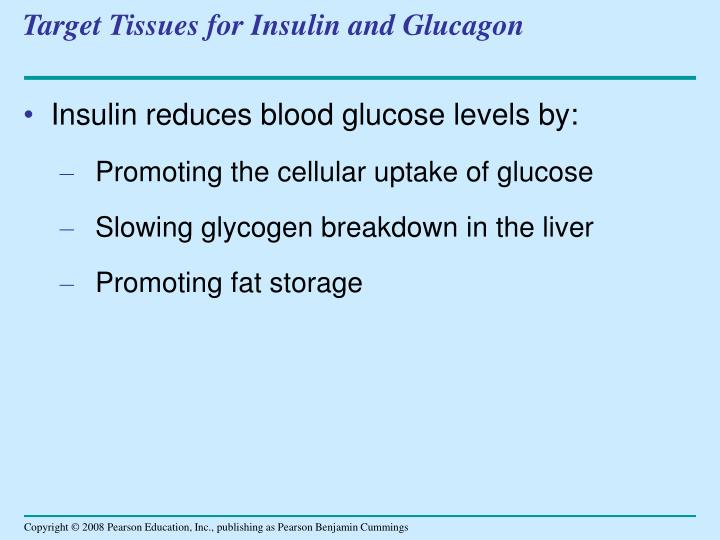 Target Tissues for Insulin and Glucagon