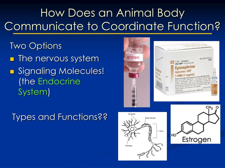 How Does an Animal Body Communicate to Coordinate Function?