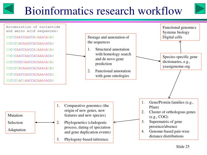 Bioinformatics research workflow
