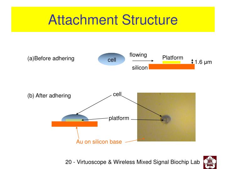 Attachment Structure