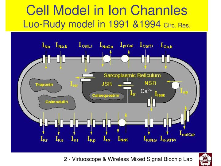 Cell model in ion channles luo rudy model in 1991 1994 circ res