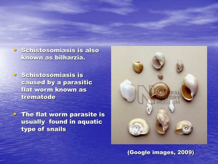 (Google images, 2009)