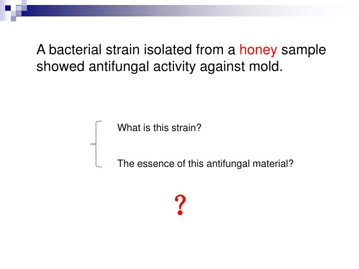 A bacterial strain isolated from a