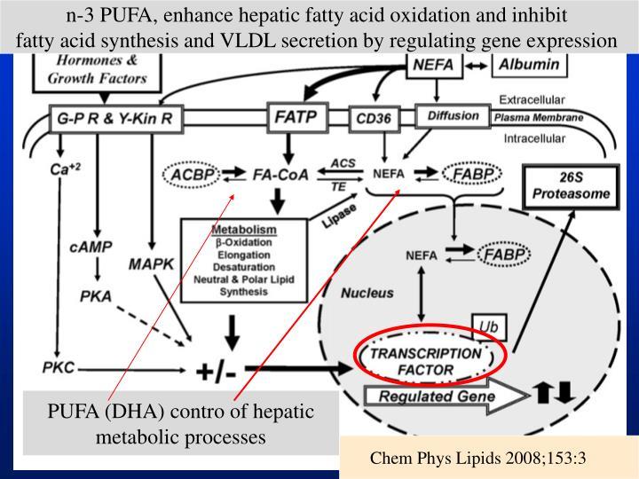 n-3 PUFA, enhance hepatic fatty acid oxidation and inhibit