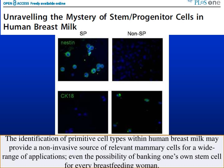 The identification of primitive cell types within human breast milk may provide a non-invasive source of relevant mammary cells for a wide-range of applications; even the possibility of banking one's own stem cell for