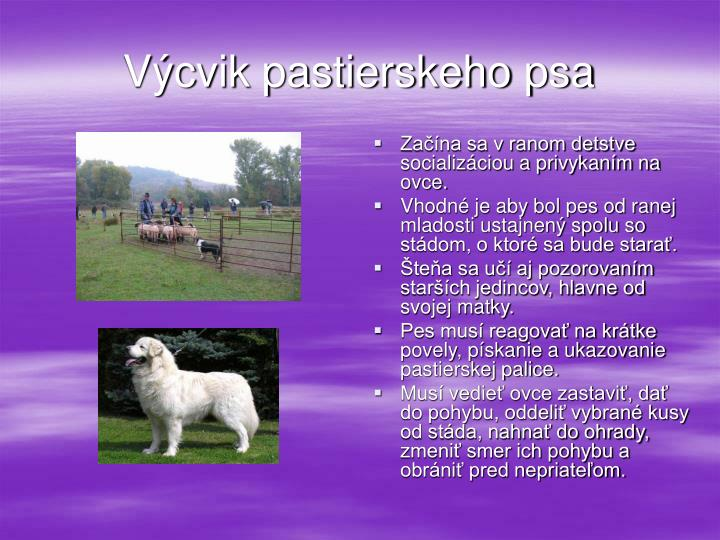 Výcvik pastierskeho psa