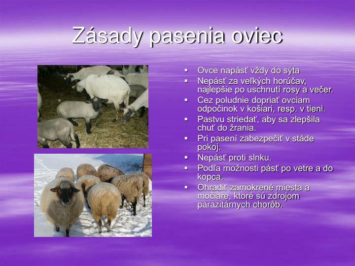 Zásady pasenia oviec