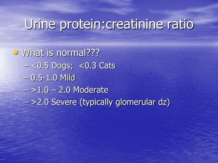 Urine protein:creatinine ratio