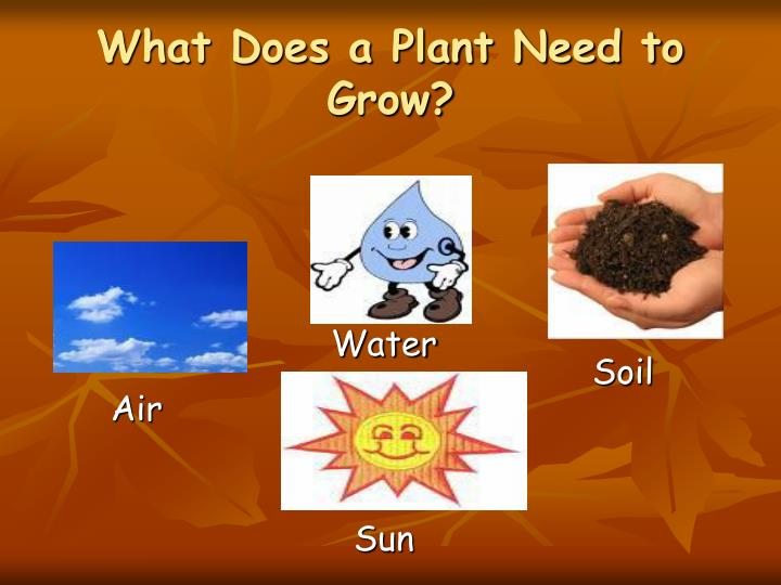 What Does a Plant Need to Grow?