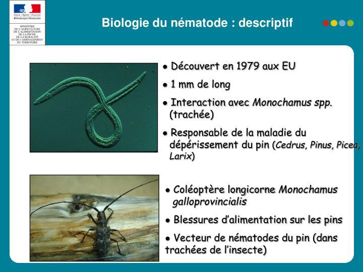 Biologie du nématode : descriptif