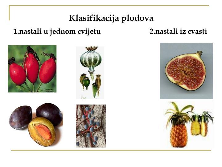 Klasifikacija plodova