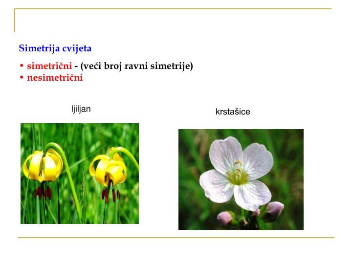 Simetrija cvijeta