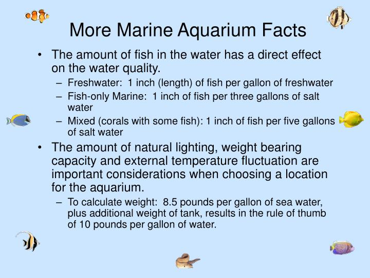 More Marine Aquarium Facts