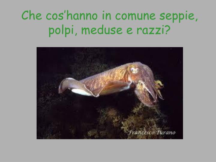 Che cos'hanno in comune seppie, polpi, meduse e razzi?