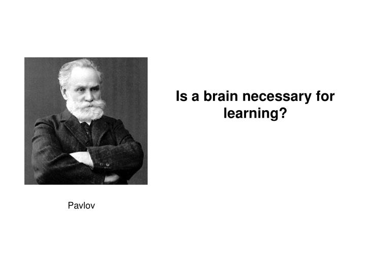 Is a brain necessary for