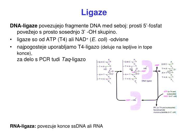 Ligaze