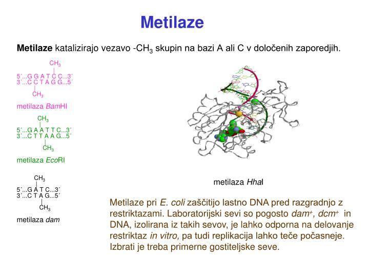 Metilaze