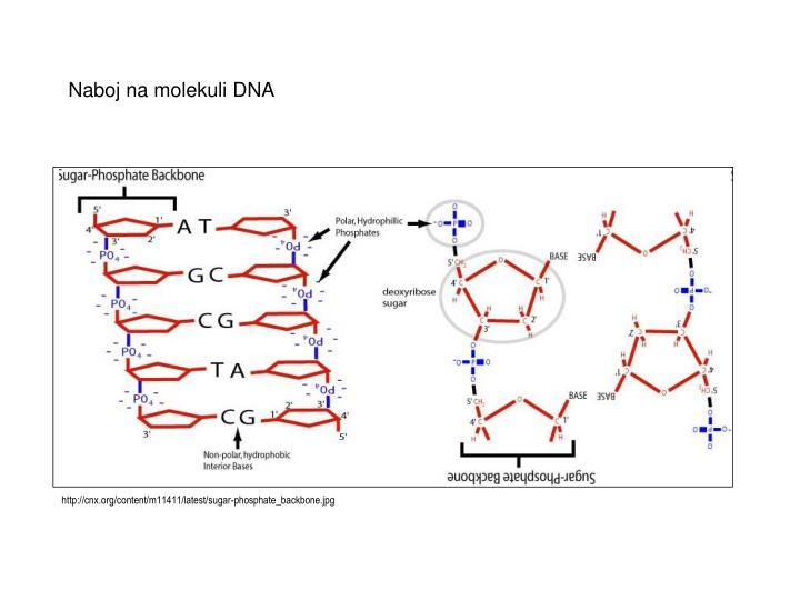 http://cnx.org/content/m11411/latest/sugar-phosphate_backbone.jpg