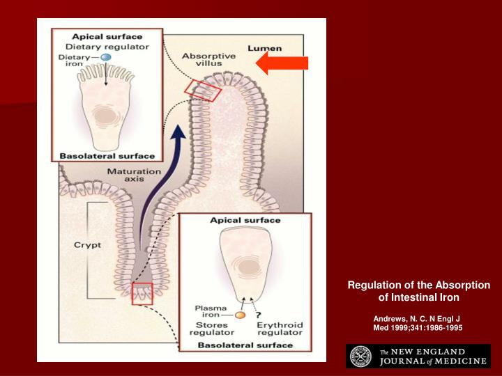 Regulation of the Absorption of Intestinal Iron