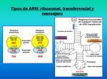 tipos de arn ribosomal transferencial y mensajero