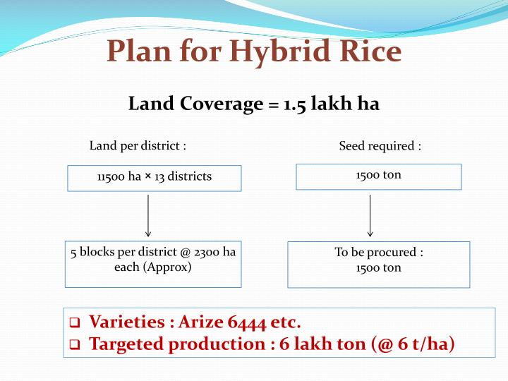 Plan for Hybrid Rice