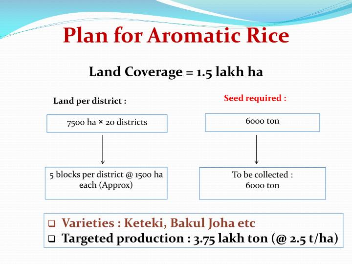 Plan for Aromatic Rice