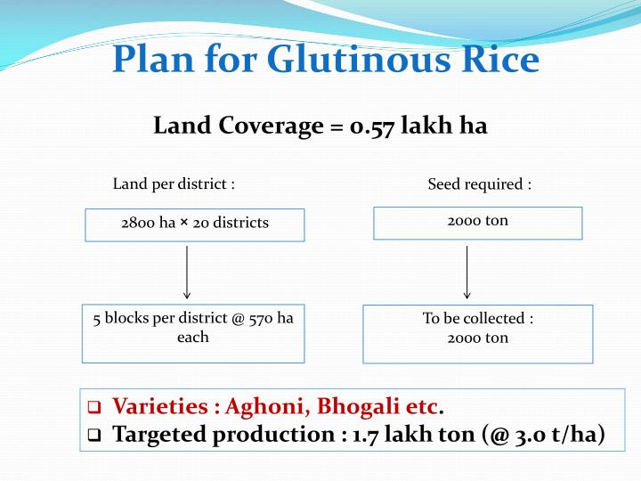 Plan for Glutinous Rice