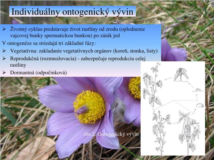 Individuálny ontogenický vývin