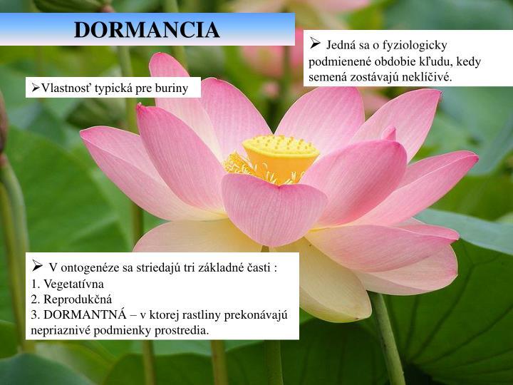 DORMANCIA