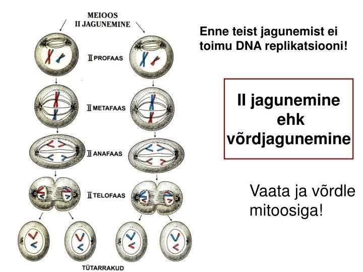 Enne teist jagunemist ei toimu DNA replikatsiooni!