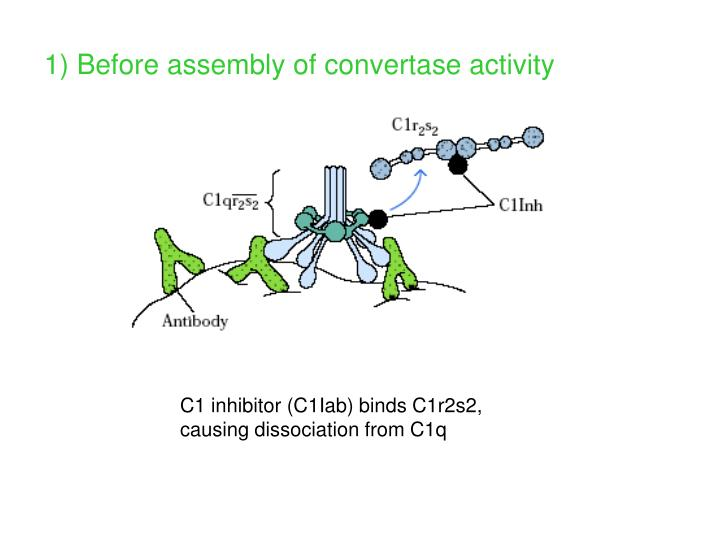 1) Before assembly of convertase activity