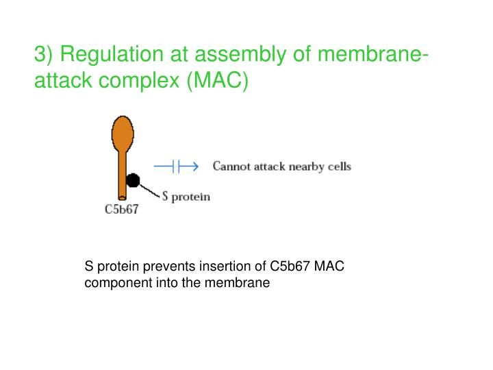 3) Regulation at assembly of membrane-attack complex (MAC)