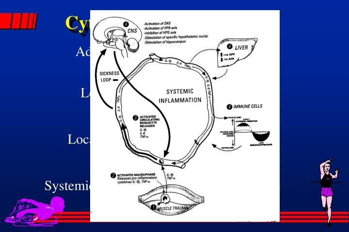 Cytokine Hypothesis