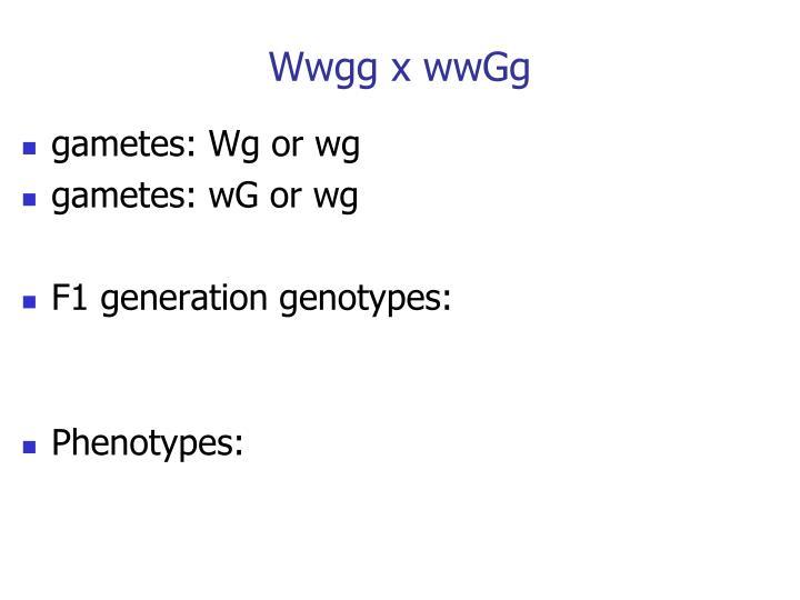 Wwgg x wwGg