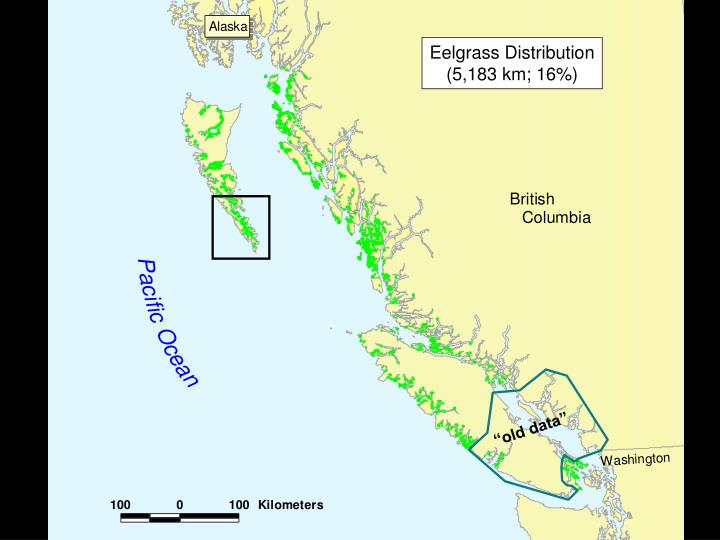 Eelgrass Distribution
