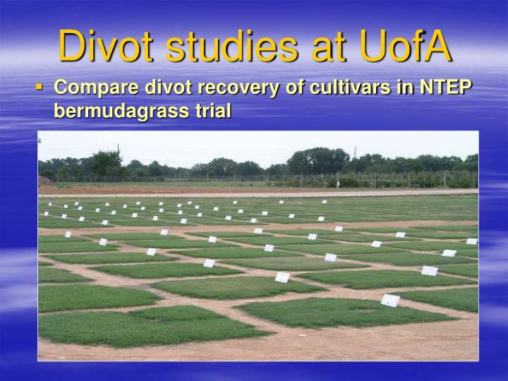 Divot studies at UofA