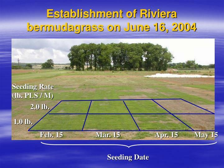 Establishment of Riviera bermudagrass on June 16, 2004