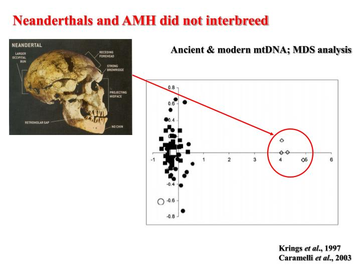 Neanderthals and AMH did not interbreed
