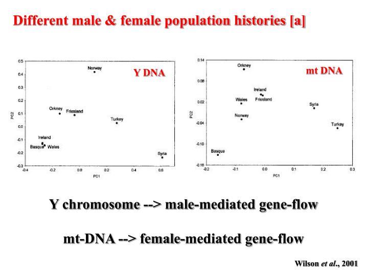 mt DNA