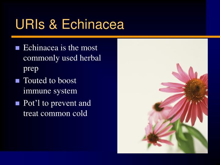 Echinacea is the most commonly used herbal prep