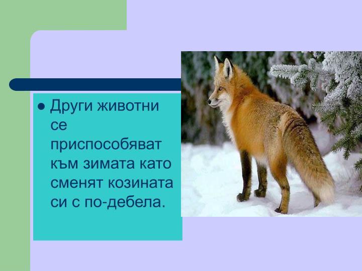 Други животни се приспособяват към зимата като сменят козината си с по-дебела.