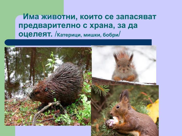 Има животни, които се запасяват предварително с храна, за да оцелеят.